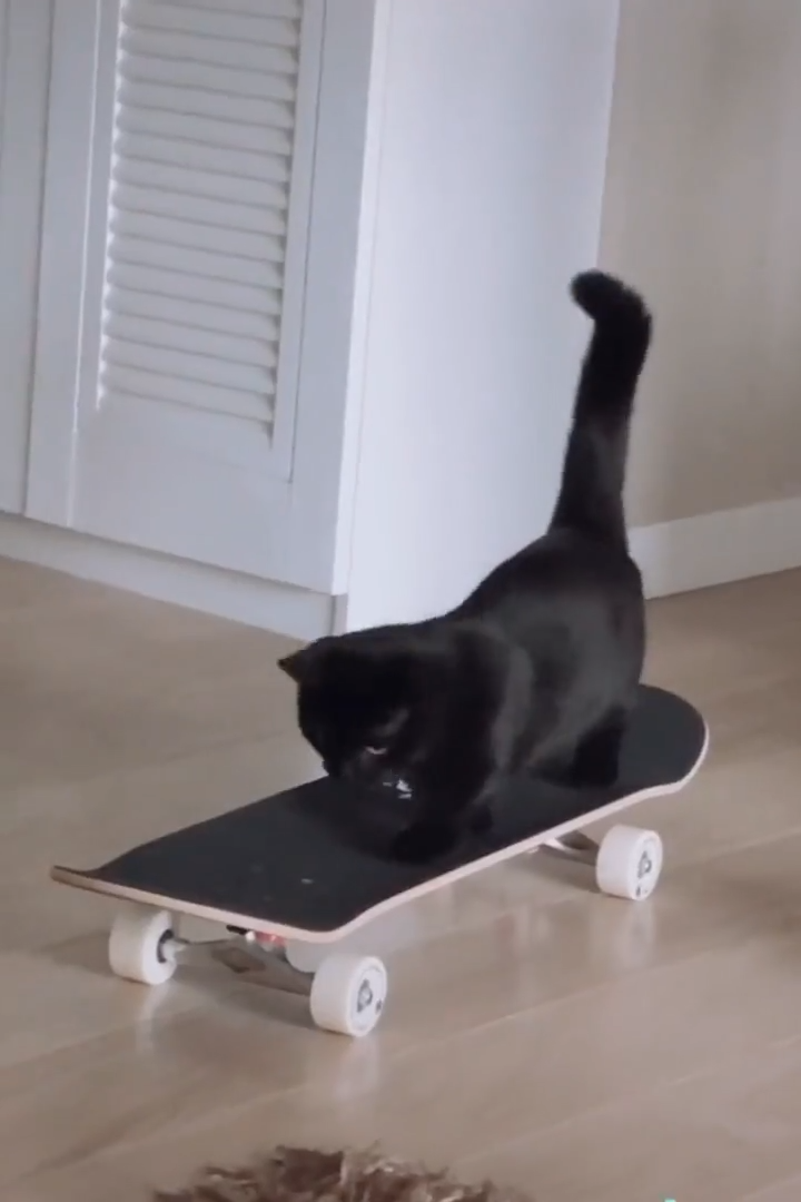 Smart Cat Learning Skateboard Video Cute Animals Cute Cats Cute Funny Animals