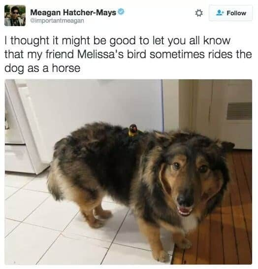 Best Funny Dogs 21 Funny Dog Memes That'll Reveal Exactly Who The Good Boys Are - Lovely Animals World 21 Funny Dog Memes That'll Reveal Exactly Who The Good Boys Are - Lovely Animals World #lovelyanimalsworld 3