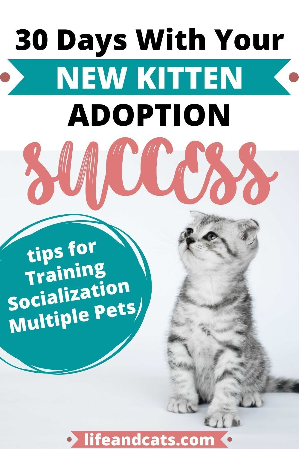 Top Tips For The First 30 Days With Your New Kitten Life Cats In 2020 Kitten Kitten Adoption Cat S