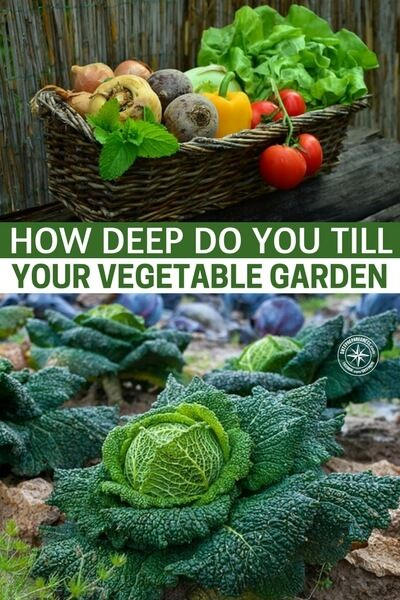 How Deep Do You Till Your Vegetable Garden Garden Pinterest