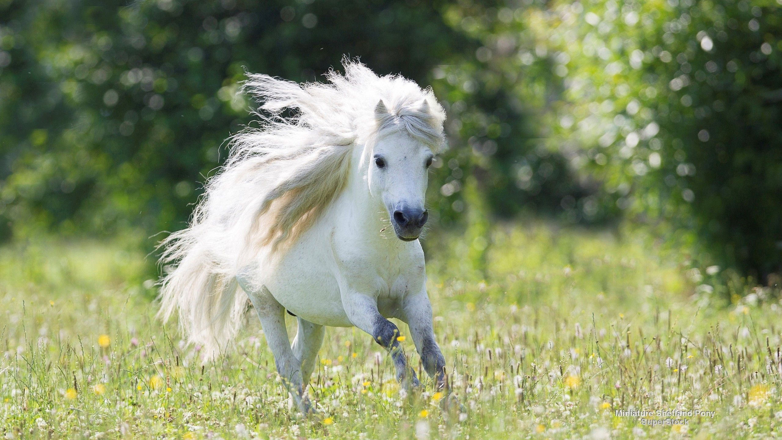 Great Wallpaper Horse Android Phone - a8a3173d6c55218a3896c8920e6059c6  2018_967541.jpg