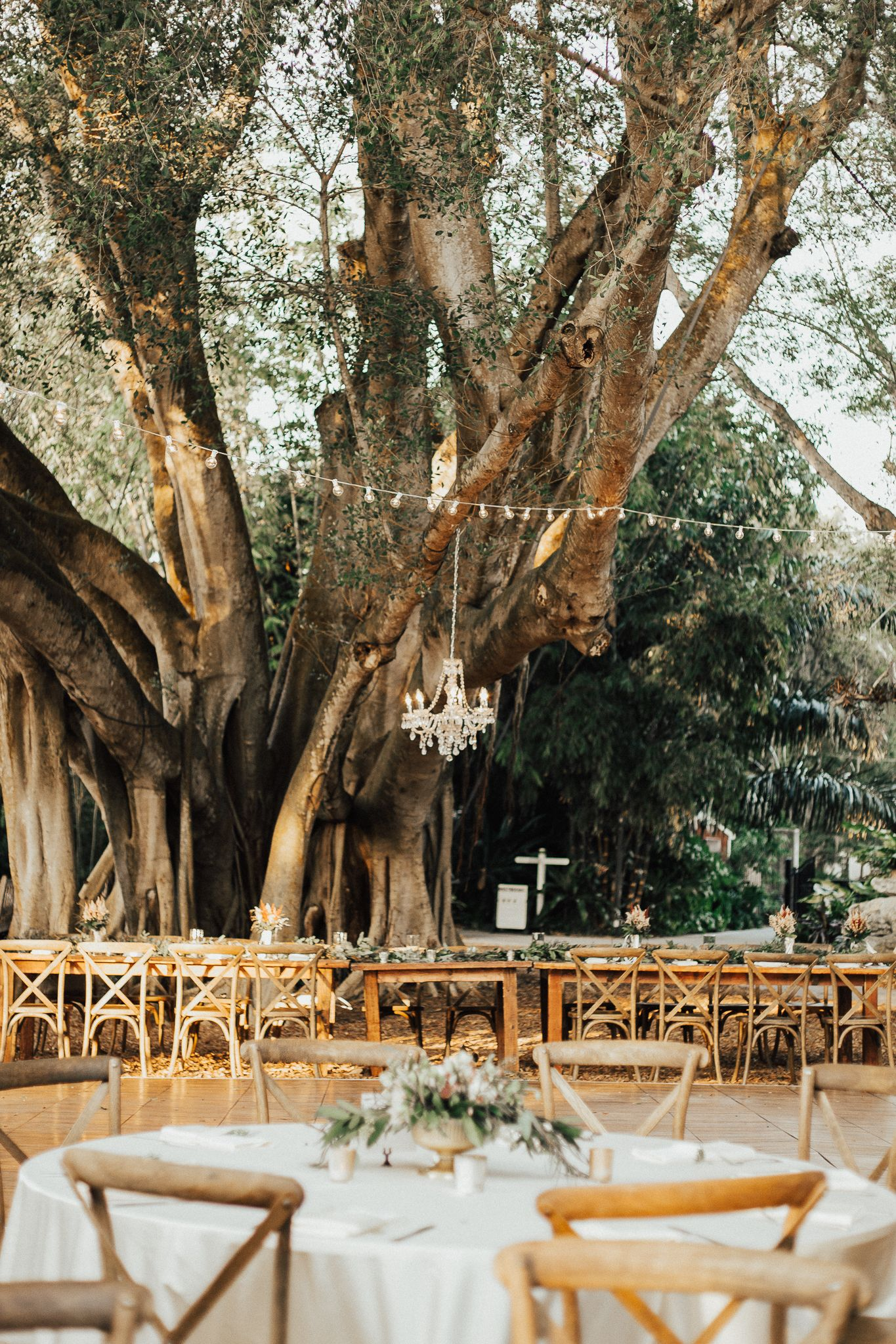 Marie Selby Botanical Gardens | Sarasota Wedding by Alicia D\'Elia ...