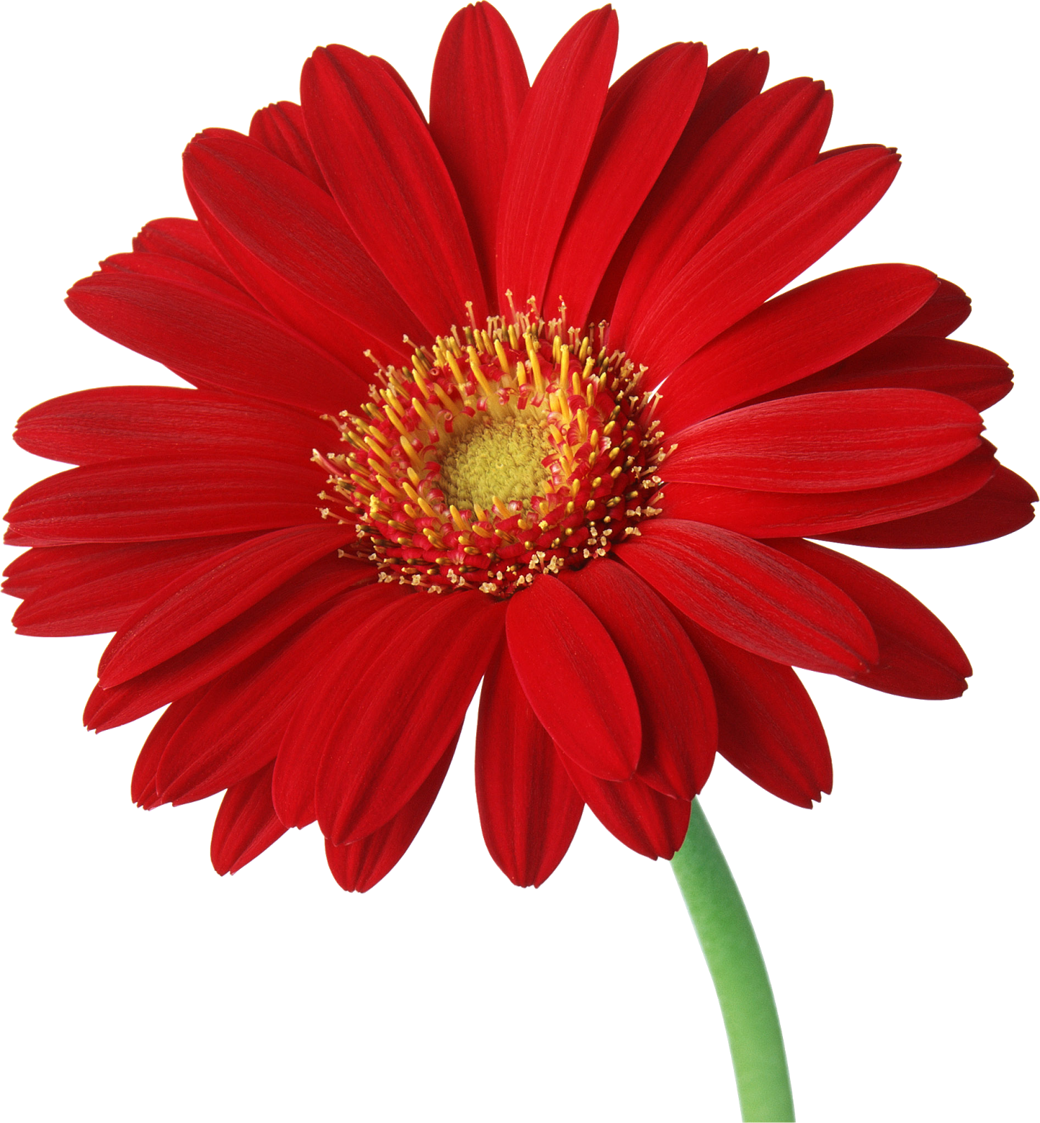 red daisy flower hd - photo #25