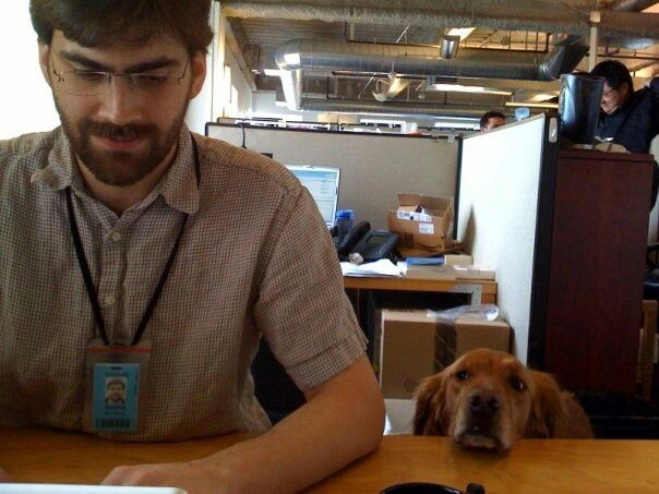 Sadie And Andrew Pair Programming Pet Dogs Dogs And Puppies Pets