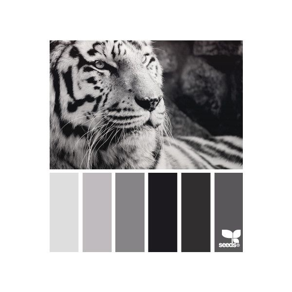 Design Seeds ❤ liked on Polyvore featuring design seeds, backgrounds, colors, animals and fillers
