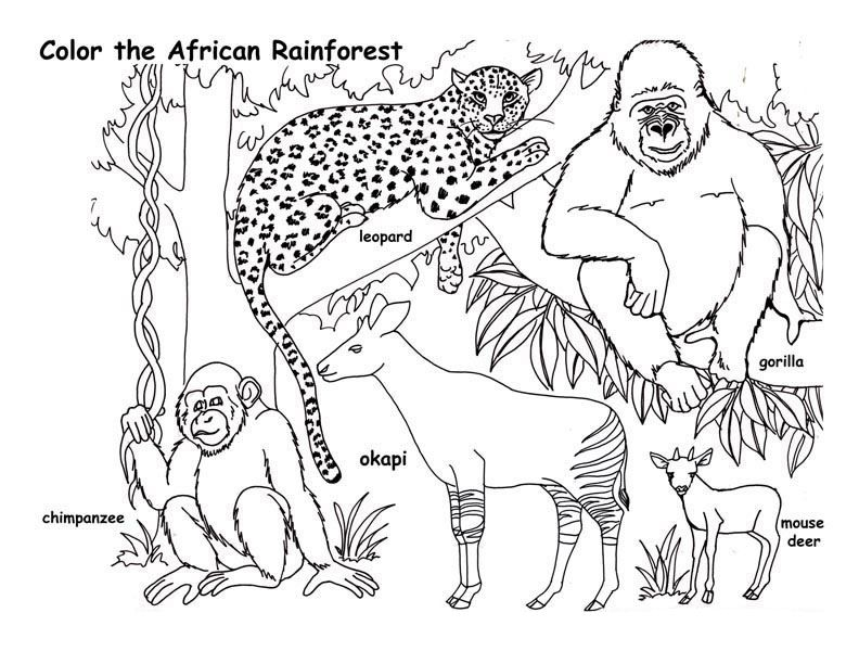 Animal Coloring Page Jungle Coloring Pages Rainforest Animals