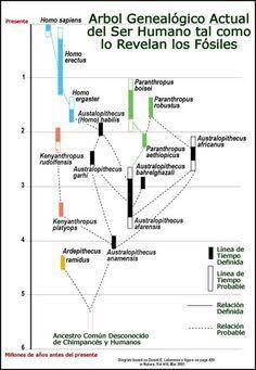 Resultado De Imagen Para Arbol Genealogico Hominidos Hominidos Evolución Humana Arbol Genealogico