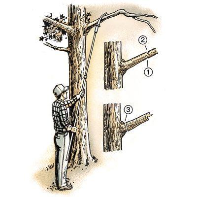 25 diy fundamentals trees