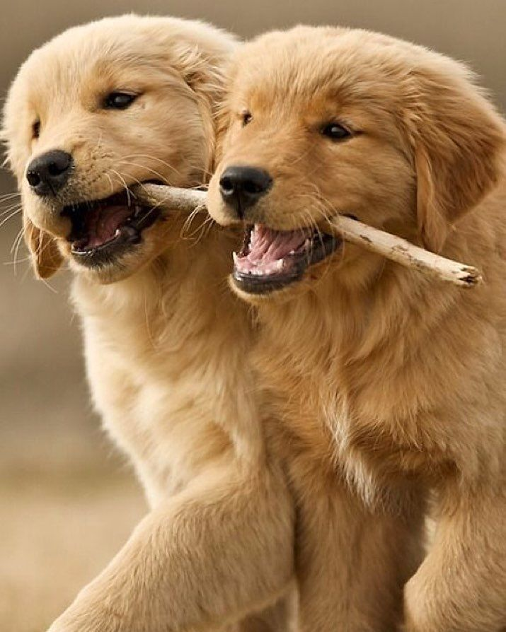 Best Friends Forever Tag Your Best Friend Or A Fellow Golden