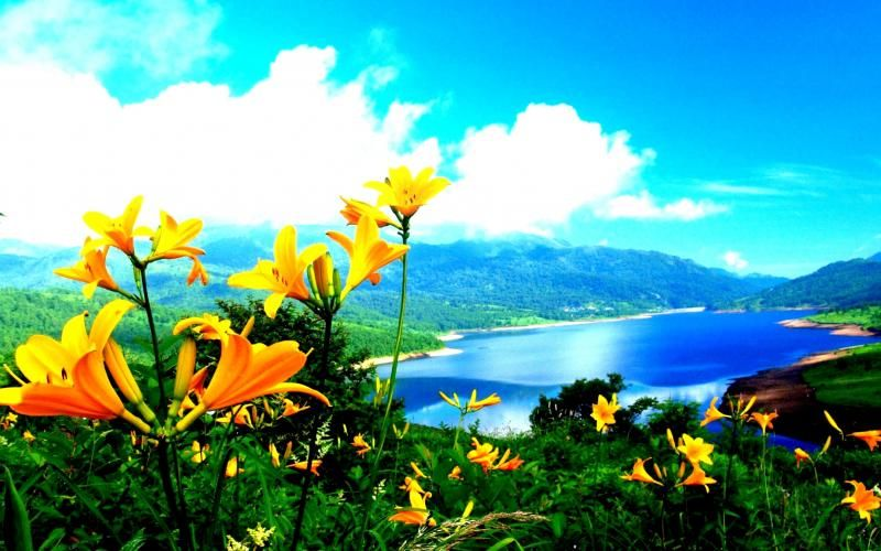 The Most Beautiful High Quality Favorite Nature Size 900x1600 Hd
