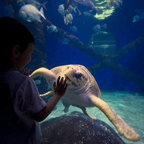 Activities And Attractions For Kids S In Virginia Beach