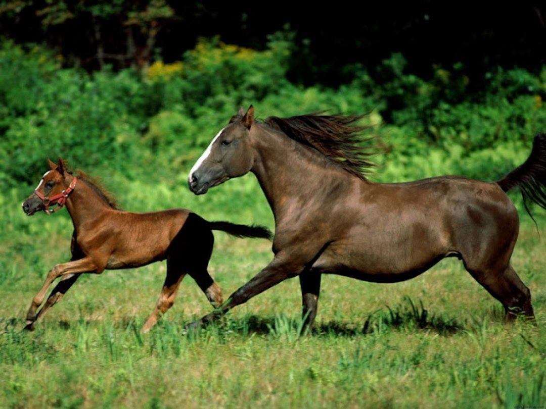 HORSE WALLPAPERS HD FREE DOWNLOAD FOR DESKTOP