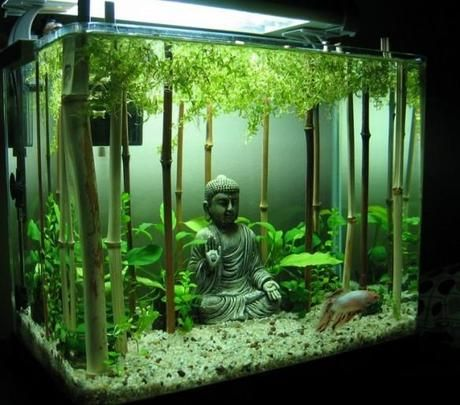 Bamboo Forest Themed Aquarium Måste Ha En Buddah!