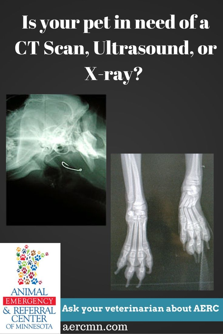 Does your pet need a xray ct scan or ultrasound ask