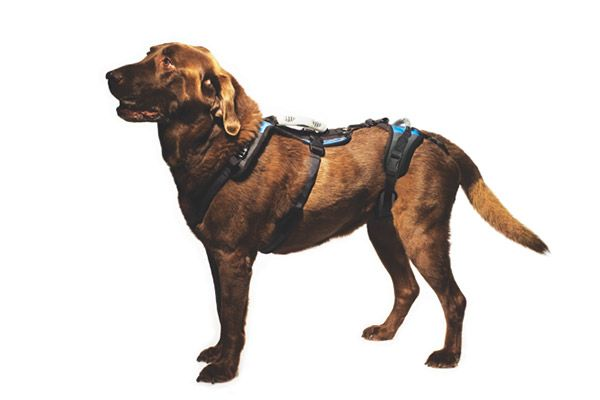 My 5 Favorite Harnesses For Handicapped Dogs 2016 Dog Harness