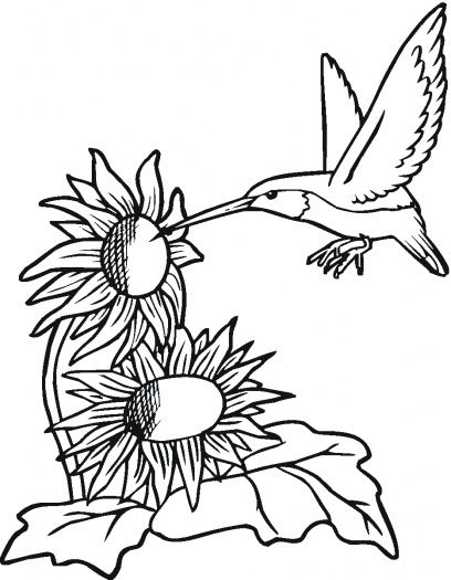 Hummingbird With Sunflowers Coloring Page Sunflower Coloring