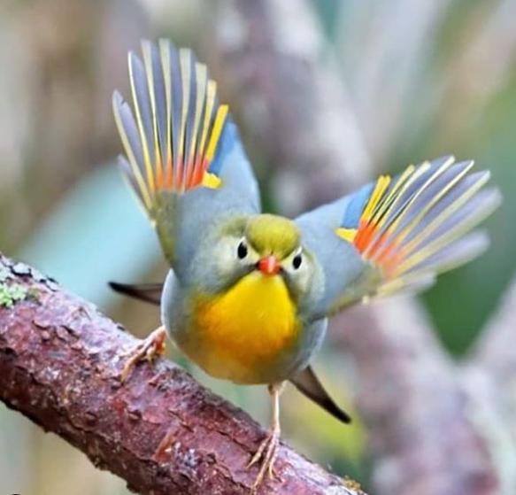 Pin En Aves Preciosas