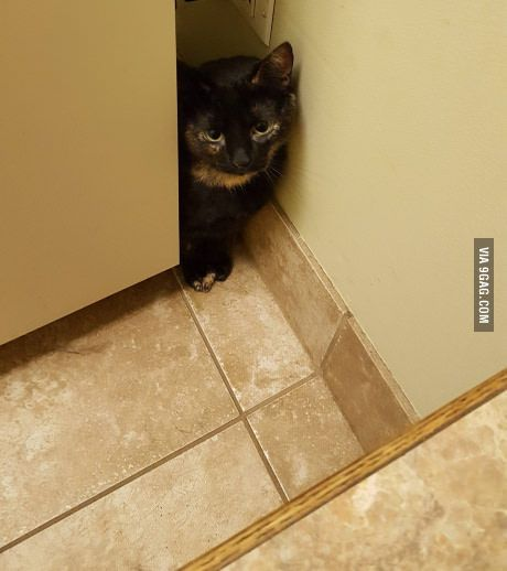 Rowena got scared at the vet.