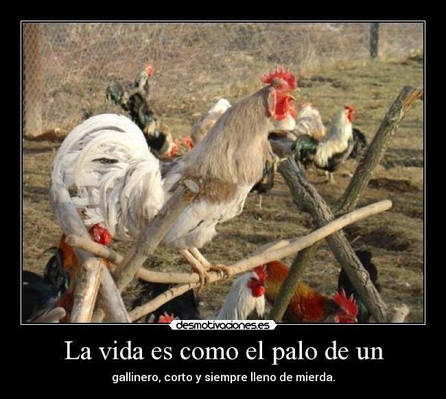 La vida es como .....#Humor