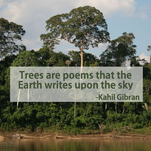 what s not to love about trees whytheamazon rainforest quote