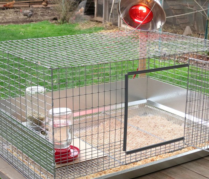 Brooder Cage Set Up With Heat Lamp Not Included Chickens Backyard Coop Building Chicken