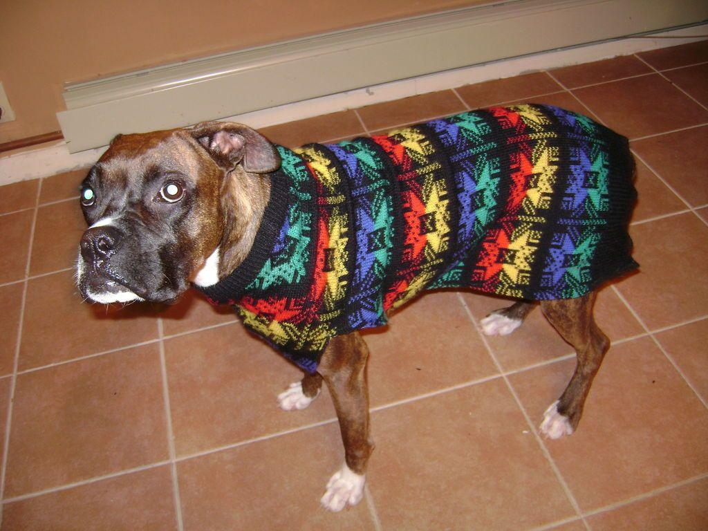 Ugly Dog Sweater | alter Pullover, Selber basteln und Mäntel