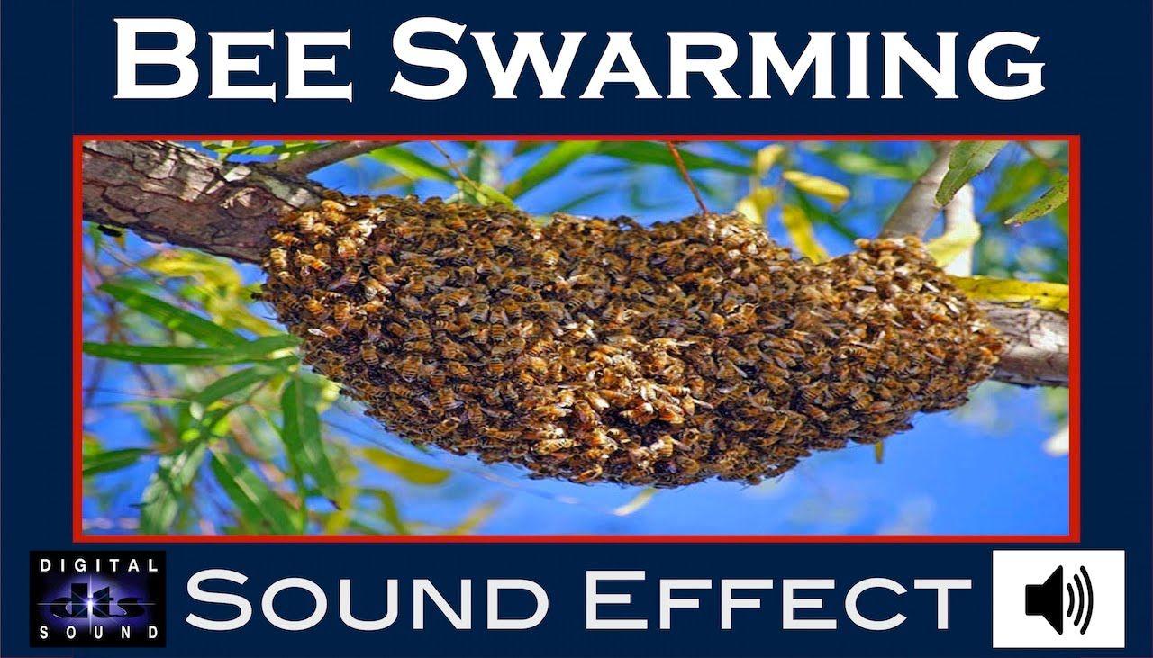 Bee Swarming Sound Effect   BEE SWARMING SFX   HD
