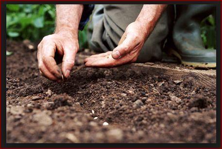 mowing and gardening Oatlands