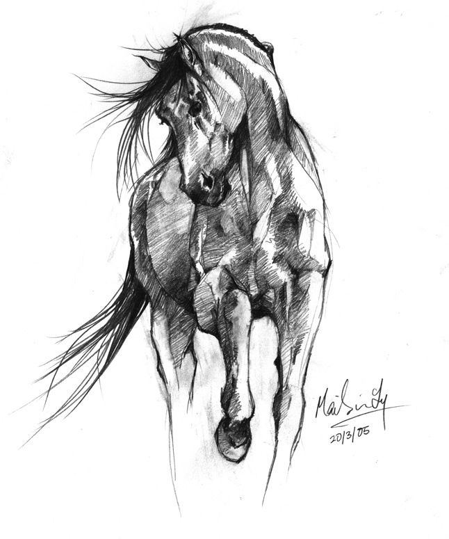 Line Drawing Horse Tattoo : Horse drawings sketches … animals pinte…