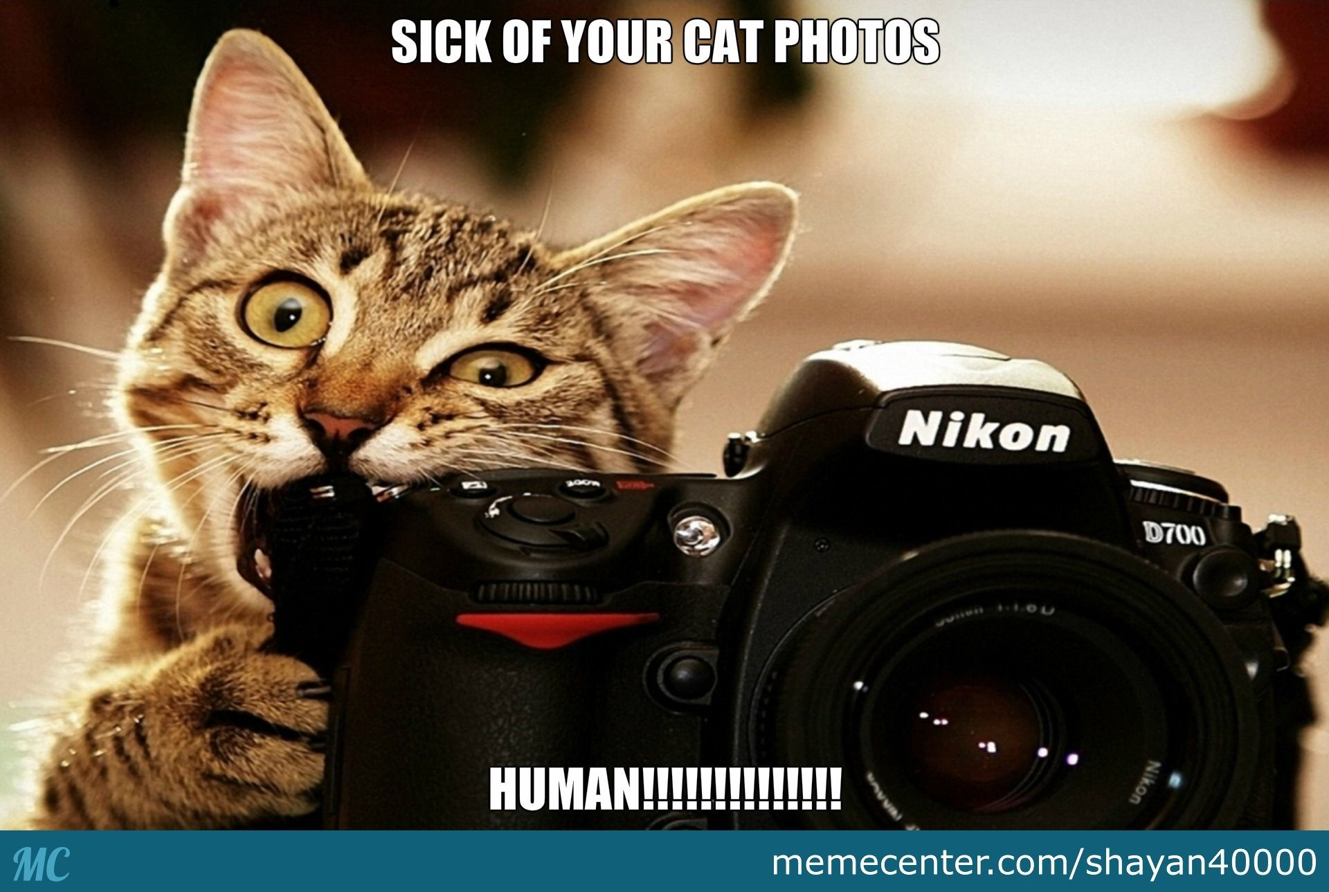 Image result for cats and cameras meme
