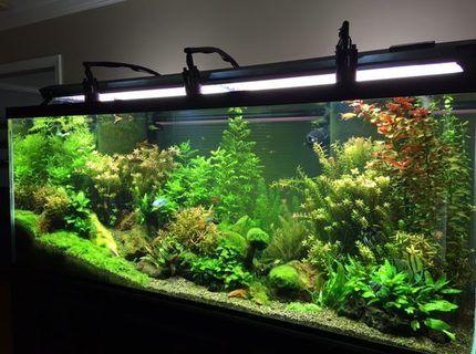 225 Standard 6 Ft Freshwater Planted Aquarium Planted Aquarium Aquarium Aquarium Set
