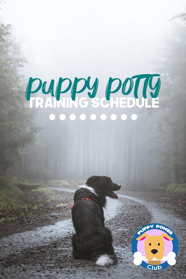 Puppy Potty Training Schedule Potty Training Puppy Puppy
