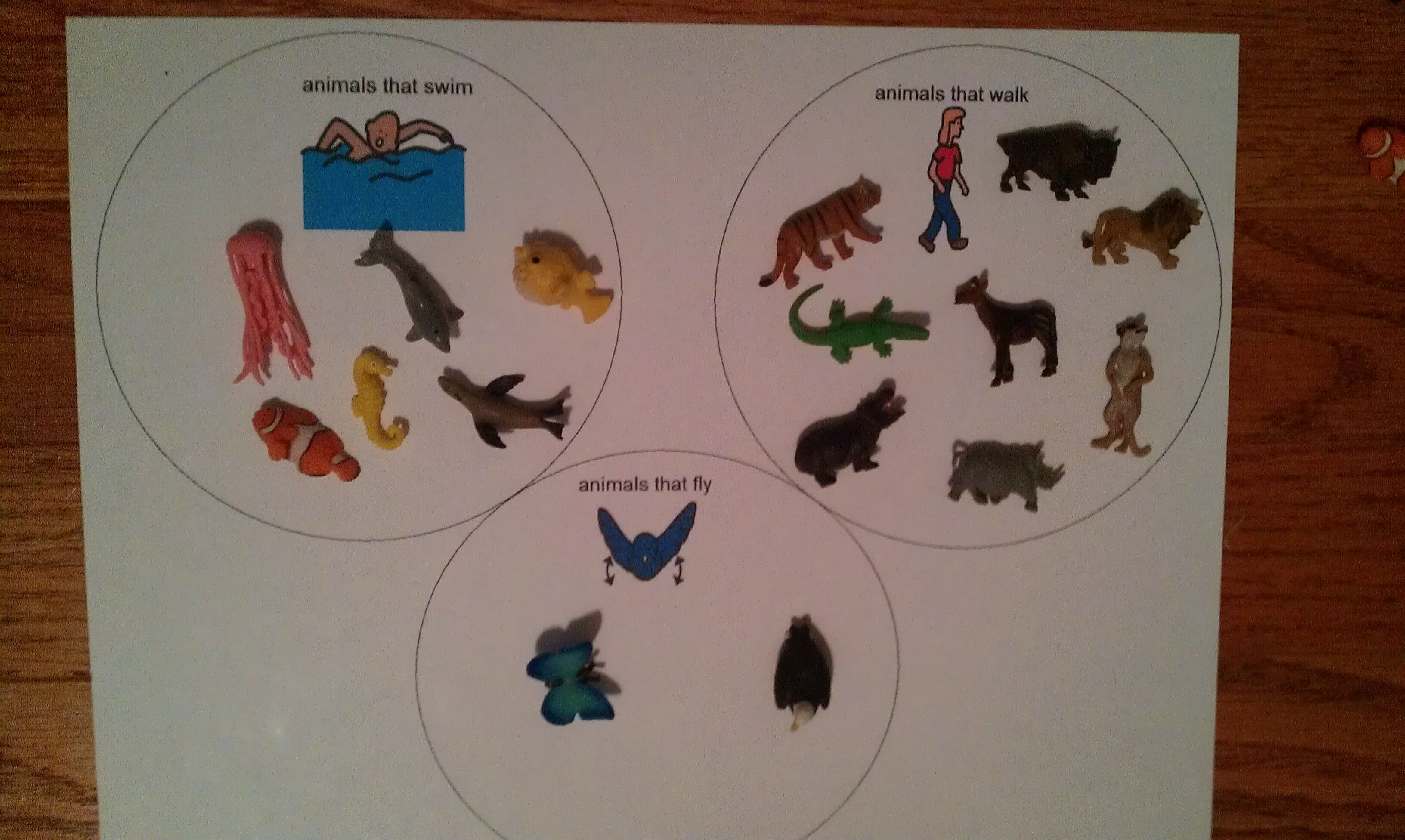 Animal Movement Sort Swim Walk Fly Animals From