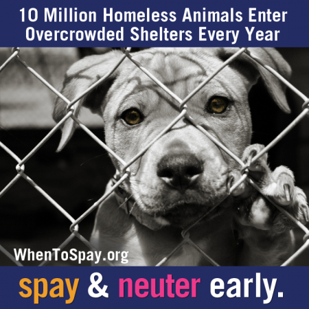 Please don't add to the problem. Shelter dogs, Animal