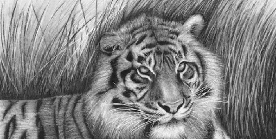 40 Beautiful and Realistic Animal Sketches For Your ...