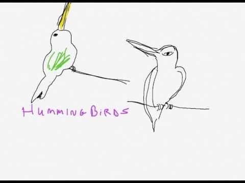 how to draw hummingbirds
