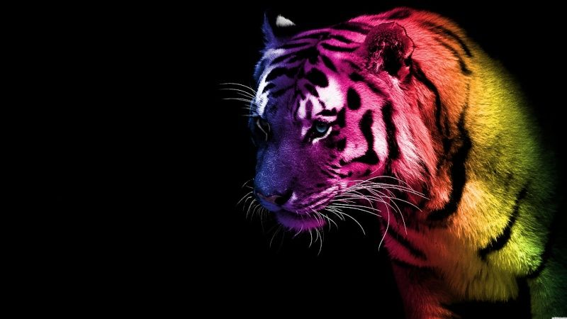 Rawr version tigre: