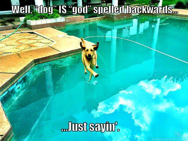 Dog Is God Spelled Backwards Goggies Pinterest Dog - 25 hilarious brilliantly timed dog photos