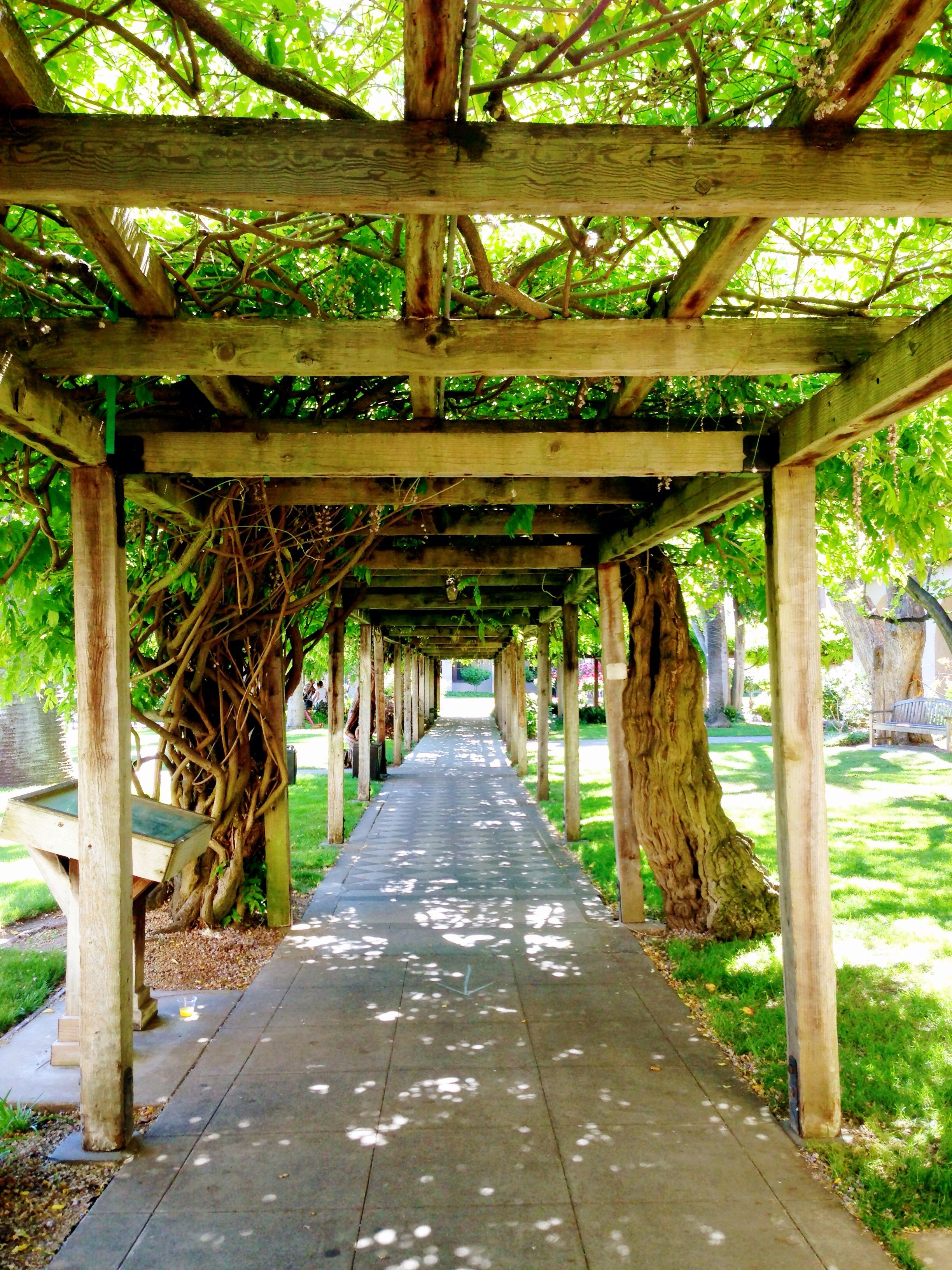 The Pathway Under The Wisteria In The Mission Gardens