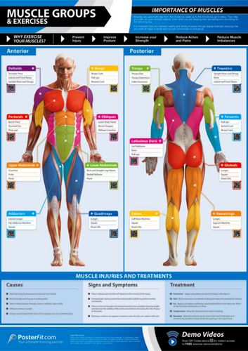 MUSCLE GROUPS AND EXERCISES Professional Fitness PosterFit Poster w//QR Code