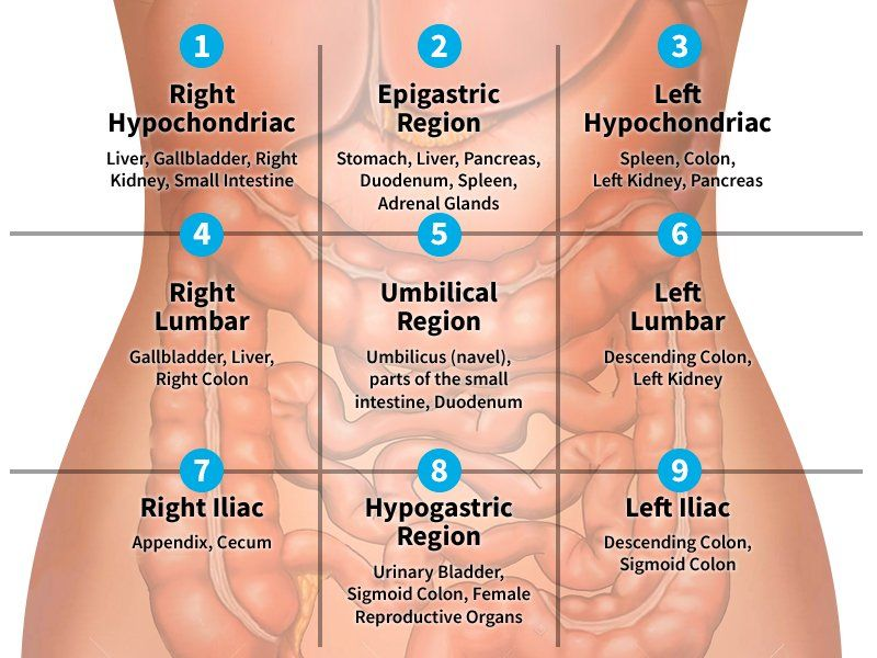 Region Of Abdomen Google Search Medical Knowledge Medical School Studying Medical Student Study