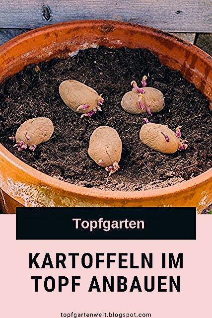 Photo of Kartoffeln im Topf anpflanzen   Anleitung für  Balkon, Terrasse und Garten   Tipps!