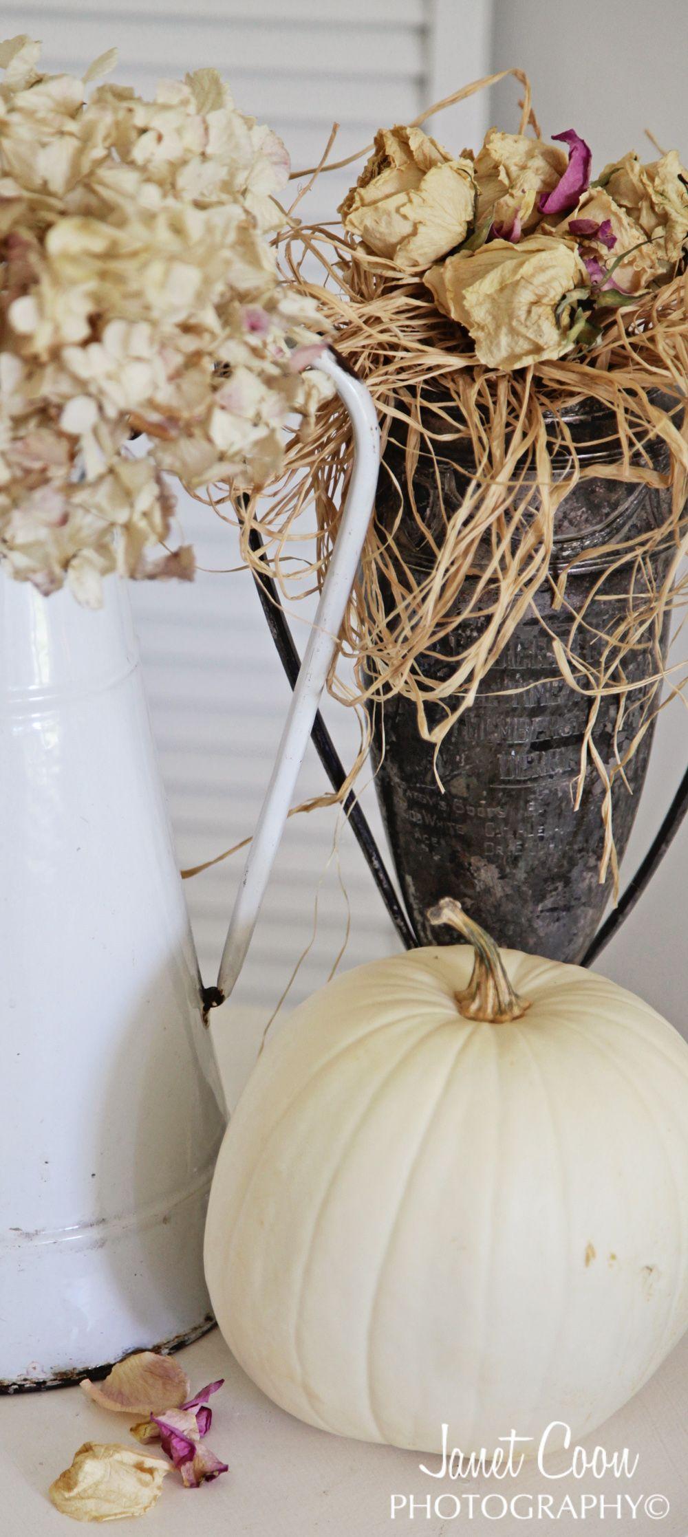Pumpkins - Pompoenen