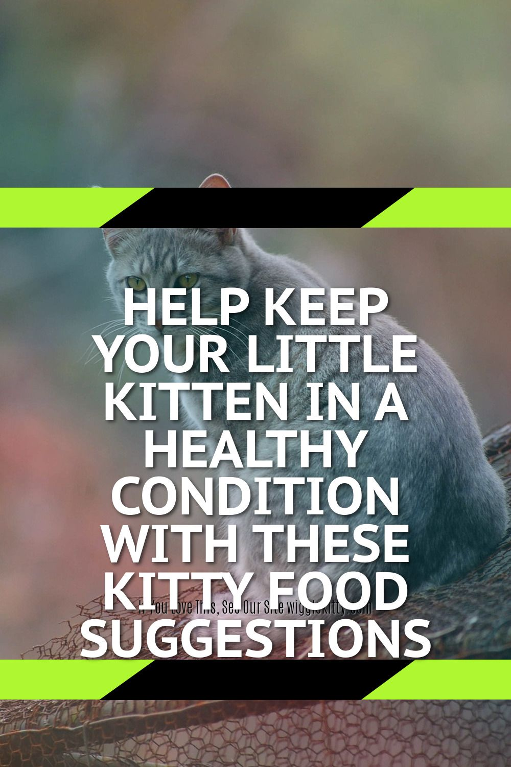 Help Keep Your Little Kitten In A Healthy Condition With These Kitty Food Suggestions In 2020 Feline Health Kitten Food Healthy Digestive System