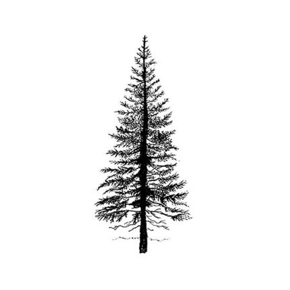 LAV094 Fir Tree 1 by Lavinia Stamps Clear Polymer Stamp   Etsy