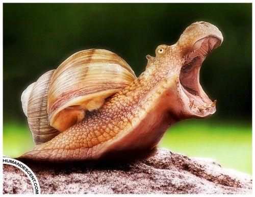 Snaippo