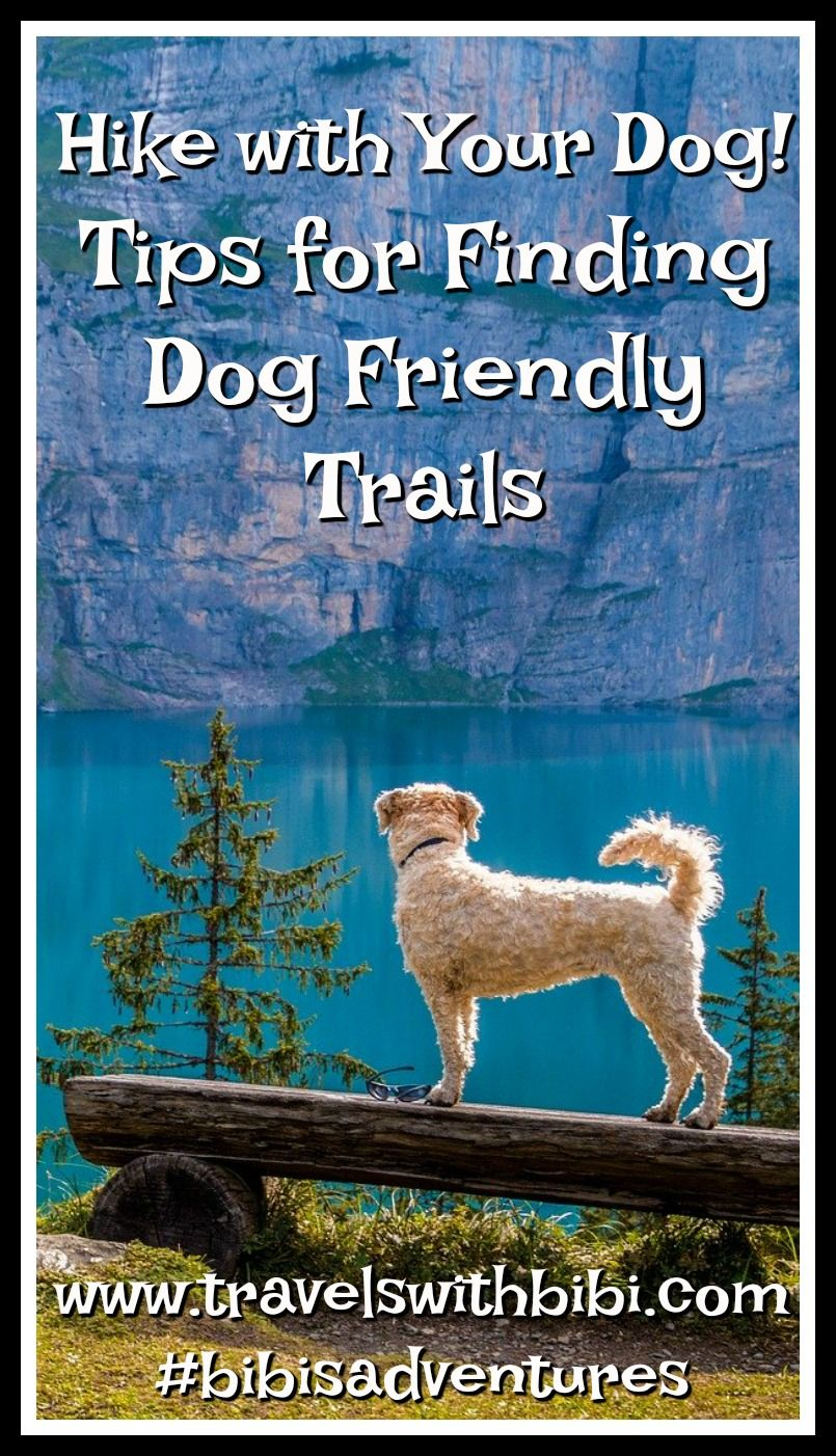 Bring Fido Along! Where To Find Dog Friendly Hiking Trails ...
