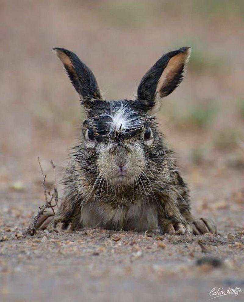один угарная картинка зайца этом сообщает представитель