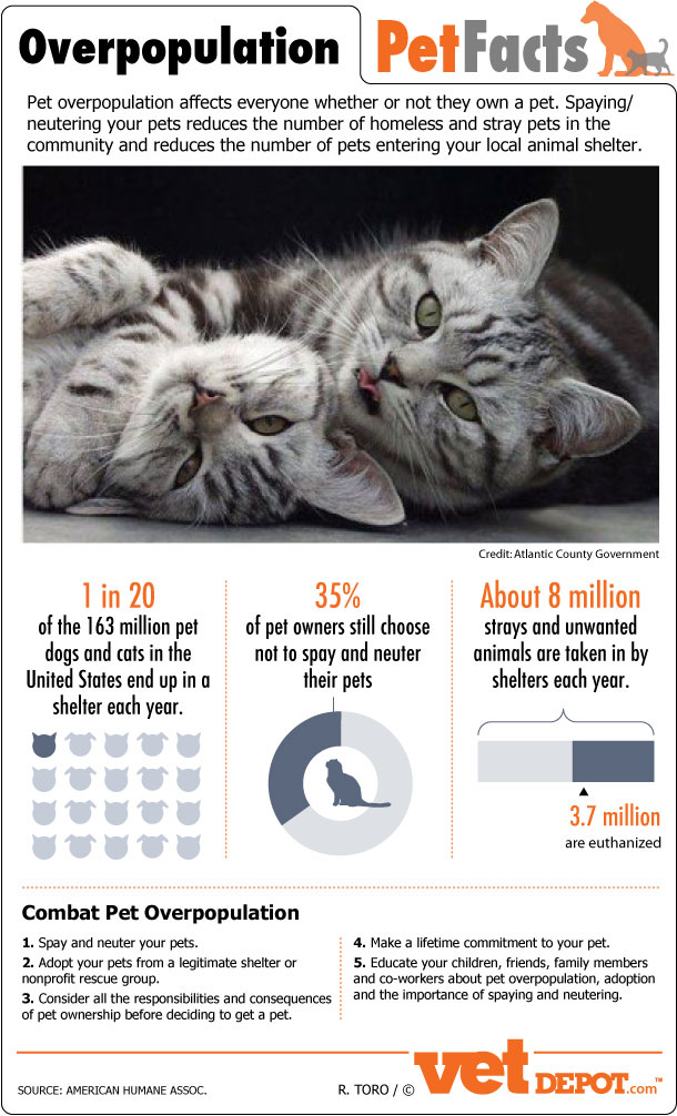 Over 8 Million Animals Are Taken In By Shelters Every Year