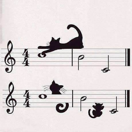 Download #musica #music #artist #note #sheetmusic #cats #musica # ...